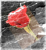 Angled Red Rose0962 special rock effect edges