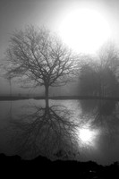 B & W Trees in Fog 02-23-06 023